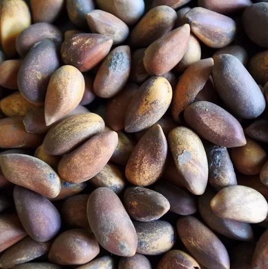 pine nut.jpg