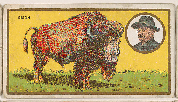 teddy bison .jpg