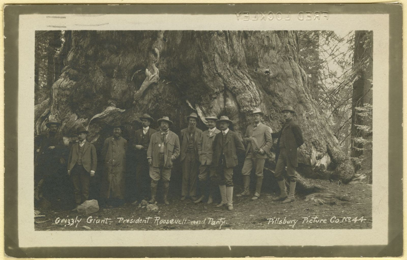 Teddy Roosevelt in Front of Sequoia_photograph of image.jpg