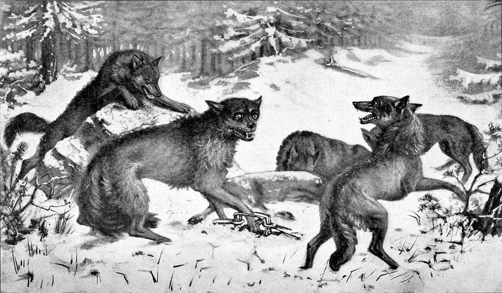 1600px-Andersch_bros._hunters_and_trappers_guide_illustrating_the_fur_bearing_animals_of_North_America_the_skins_of_which_have_a_market_value_(1906)_(18195298015).jpg