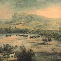 bison watercolor 2.jpg